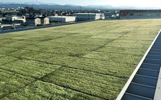 金沢支店の屋上緑化の写真